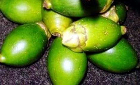 buah pinang muda